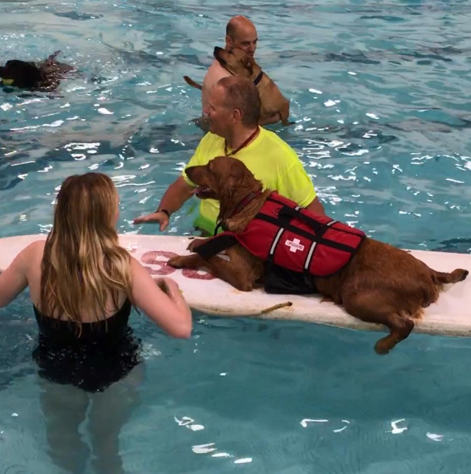 Doggie dip